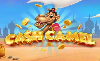 Découvrez la machine à sous Cash Camel d'iSoftBet sur 777.ch !